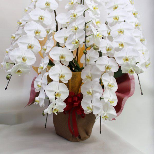Plants Orchids